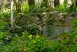Yew-and-boxwood tree grove