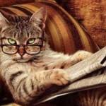 Изучение языка кошек шведскими учеными