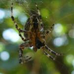 Устройство против пауков