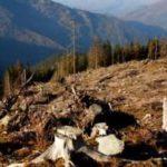 Кабинетом министров Украины принято решение о временном запрете санитарных вырубок в лесах Украины