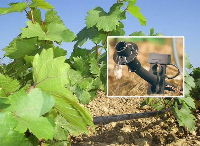 Капельное орошение виноградников и другие способы полива2